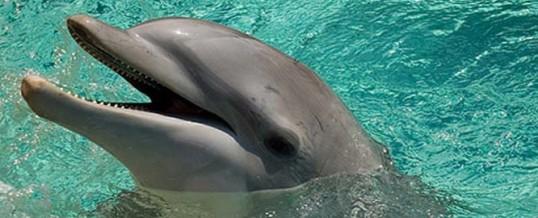 delphin italia – immagine 1